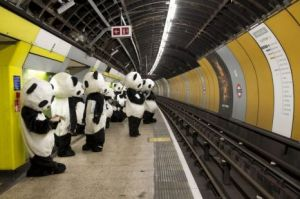 pandas-waiting-for-tube