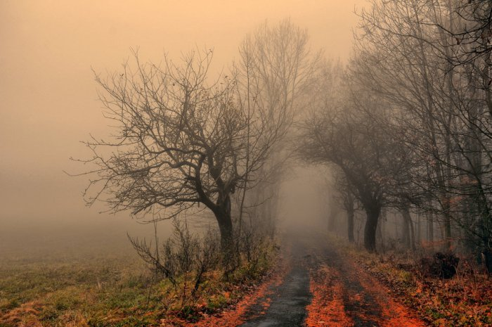 misty_autumn_by_tomsumartin-d32kd5o